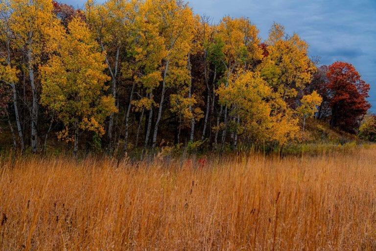 Long Lake MN Landscape